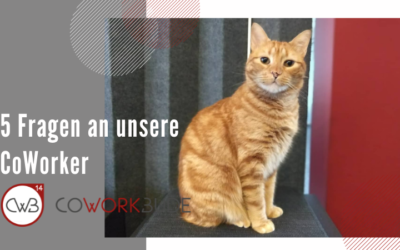 5 Fragen an unsere CoWorker – Lio Jansen-Minconi